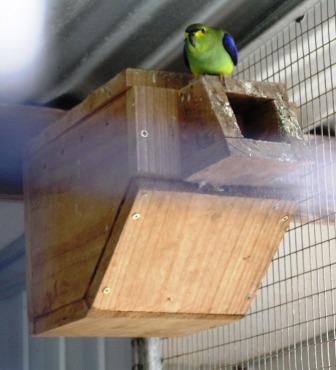 Parrot nest box design - photo#11