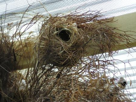 Finch Nest Photos